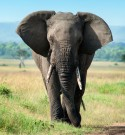Donate to Save the Elephants